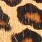 Leopard-skin printed leather