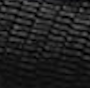 Calf | Tejus nero
